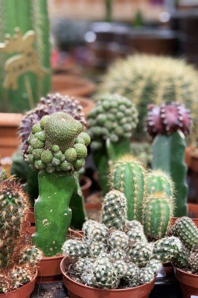 Botanik_Promo-Plants_03