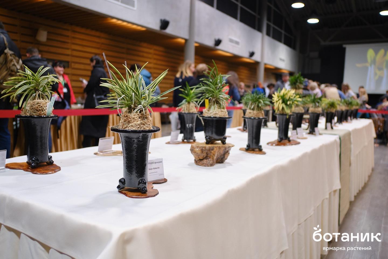 Выставка Ярмарка орхидей и редких растений Ботаник